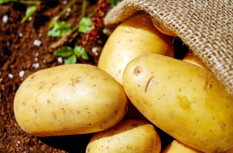 Kulit kentang dapat dibuat menjadi masker rambut untuk mencegah kebotakan